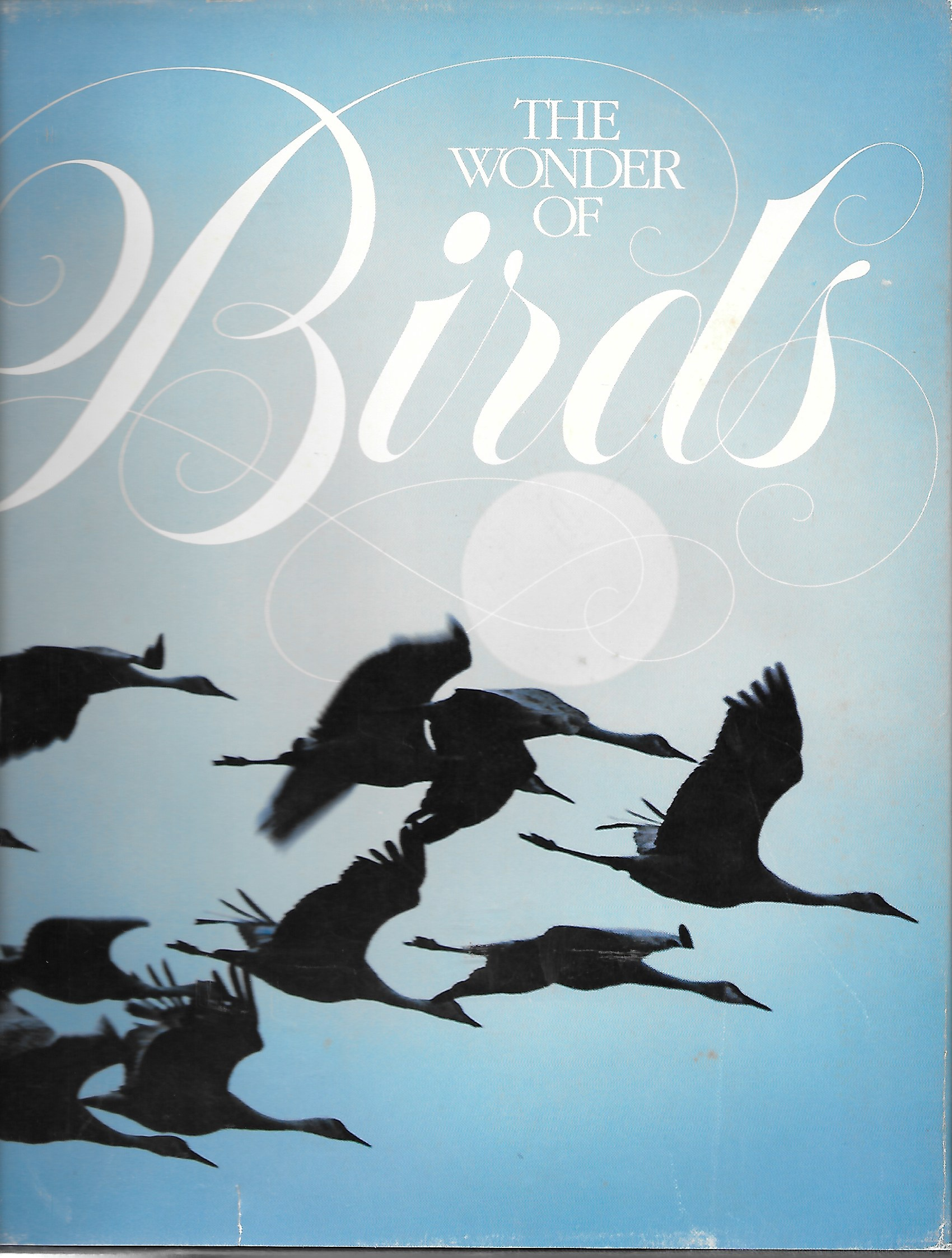 Image for The Wonder Of Birds